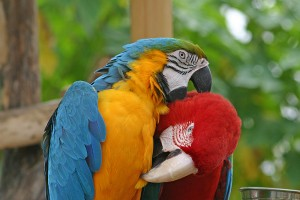 Thinking Of Buying A Parrot The Parrot Society Uk