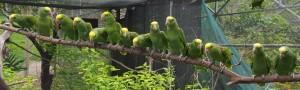Belize Amazons