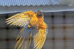 Blue & gold shower