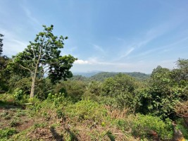 Conservation site