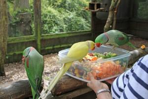 Selective feeding