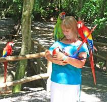 Tame Macaws