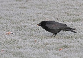 Birds need to eat more in cold weather conditions