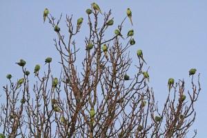 Poplars 2