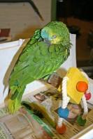 sick parrot