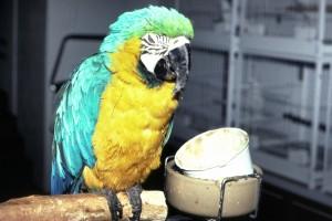 Sick macaw