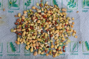 Sprouted pulses